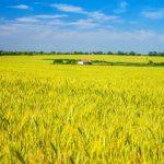 normativa-sicurezza-settore-agricoltura